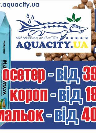 Корм для рыбы (осетр, осетр малек, карп, сом)