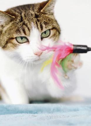 Дива - молодая кошка с красивыми глазами, привита