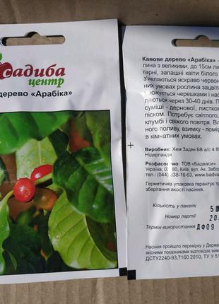 Семена кофейное дерево Арабика