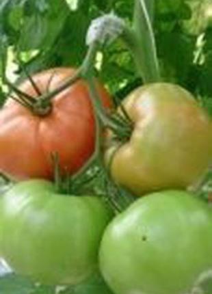 Кистедержатель дуга/гроноутримувач для помидора 6,0 мм, 25000 шт.