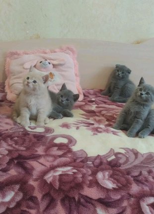 Веслоухие и прямоухие котёнки.