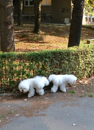 Выгул собак в Киеве.