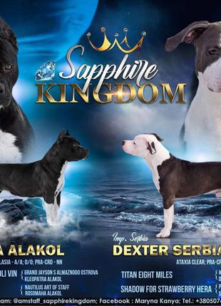 """Цуценята з Розплідника """"Sapphire Kingdom"""" КСУ-FCI з тестами"""