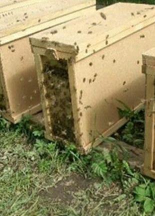 Продам пчелопакеты четыре рамки