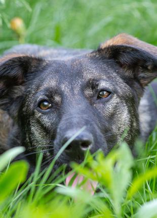 Лиза - контактная собака в добрые руки