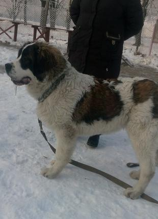 Дрессировка собак в Боярке