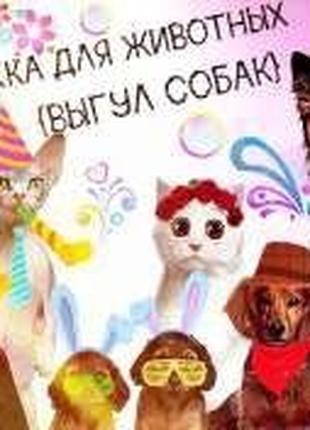 Передержка животных: отель для собак и кошек