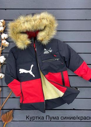 Зимняя куртка с удлиненной спинкой