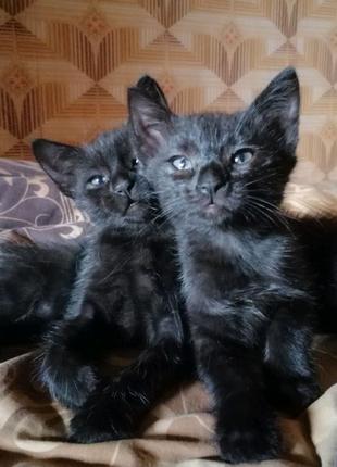 Котята бесплатно в Каменском