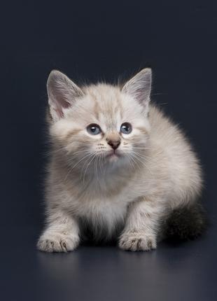 Отдам в хорошие руки котенка девочку Вонни