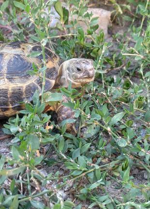 Пропала черепаха