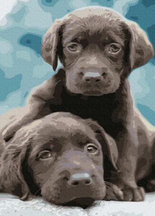 Картина по номерам щенки собаки псы