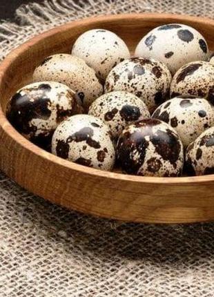 Яйця перепілки, тушки