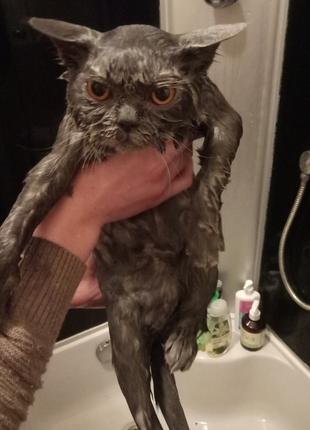 Помою Вашего кота!:)
