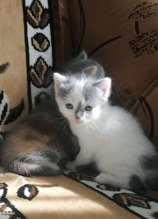 Кошеня хлопчик і дівинка