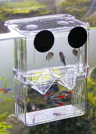 Отсадник нерестовик в аквариум