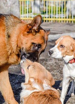 Дрессировка собак Черноморск и область