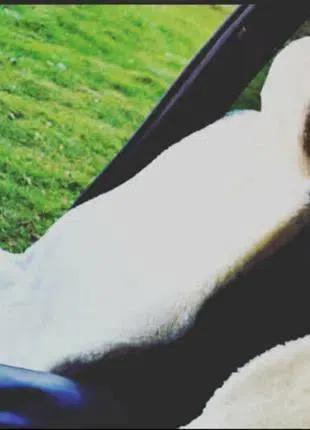 Универсальные накидки, чехлы на сидение автомобиля из овчины