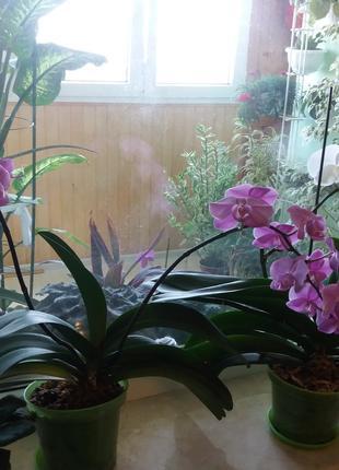 Уход за Вашими комнатными растениями, рекомендации.