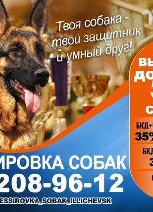Дрессировка собак Одесса и область