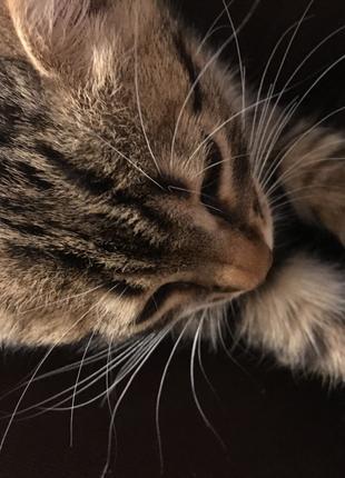 Обеспечу вашего кота хорошим уходом на время вашего отъезда !