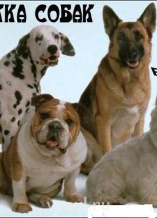 Передежка собак. Гостница для животных
