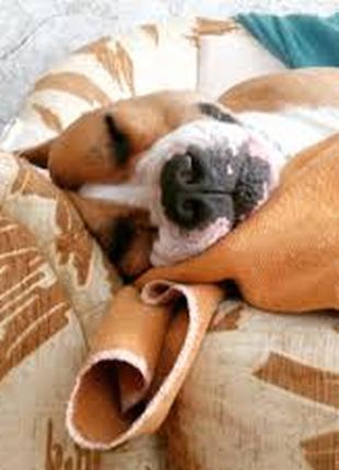 Передержка животных, собак