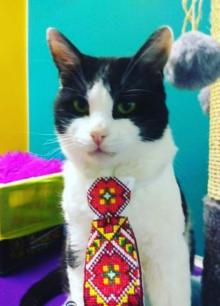 Передержка для котов