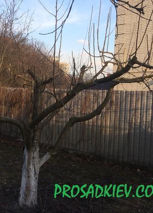 Профессиональня обрезка плодовых деревьев