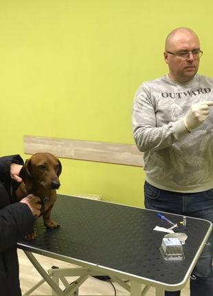 Прием ветеринара
