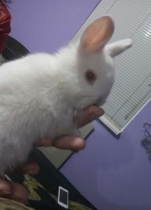 Консультации по уходу за декоративными кроликами