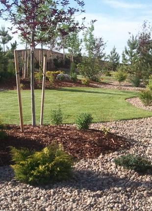 Озеленення та благоустрій приватних ділянок