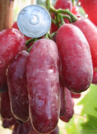 Черенки винограда Элитных сортов