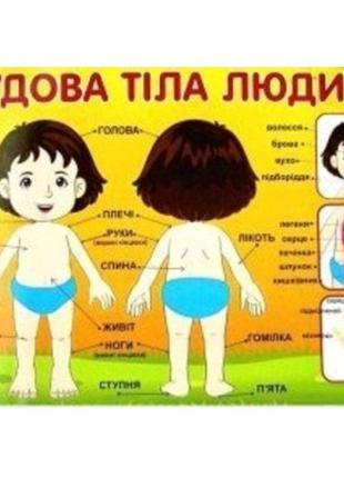 Плакат 0209 Строение тела человека (27 6)