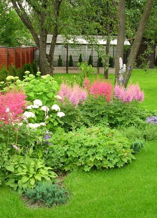 Создание газонов. Высадка растений