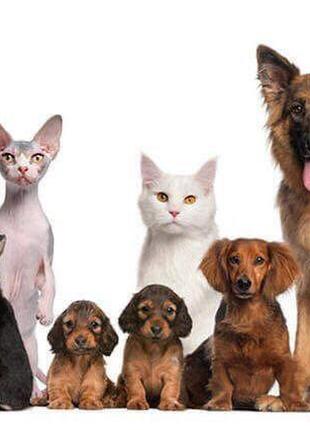 Передержка собак (маленьких пород), котов, грызунов
