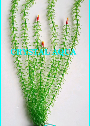 Растение 46см №1