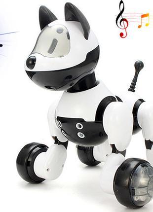 Животное MG010 Собака