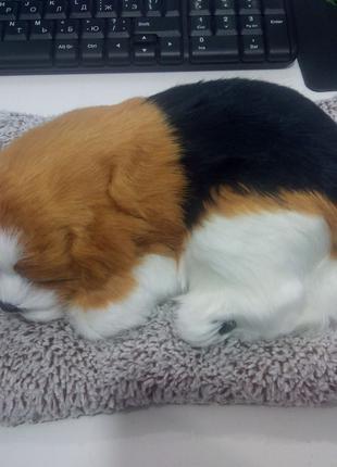 Собачка на подушке G1 (большая) (80)