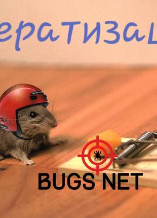 Дератизация, борьба с мышами, крысами