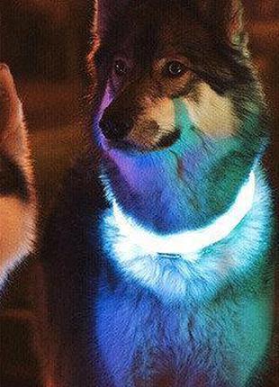 Светящийся ошейник для собак в виде жемчужин Pet's simulated p...
