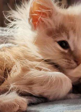 Подарую кошеня