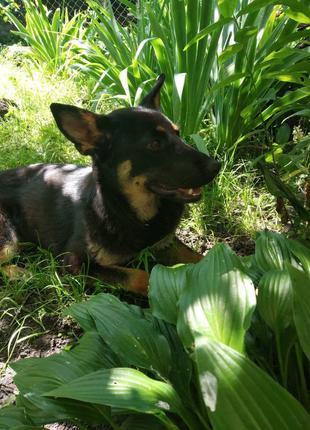Красивая молодая собака ищет дом!