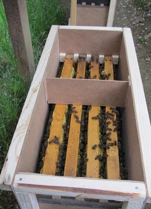 Бджолопакети Карпатських бджіл