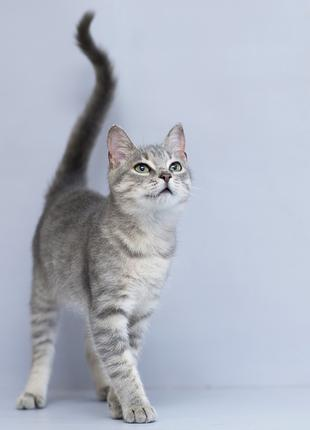 Отдам в хорошие руки котика подростка Кая