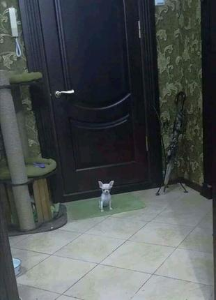 Уборка квартир/коттеджей/домов