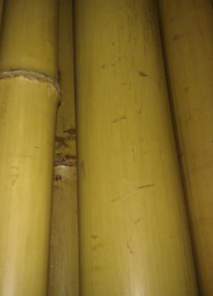 Бамбук L= 3м, d=55-70мм. Балка. Брус. Рейка.