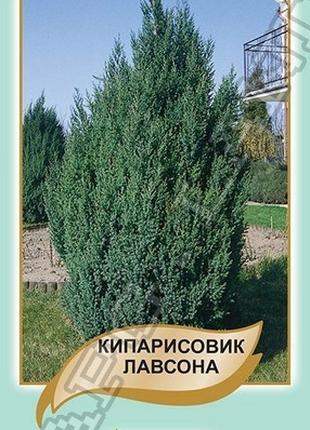 Кипарисовик Лавсона - 0,1 грамм А