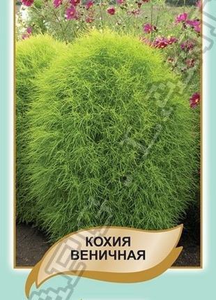 Кохия веничная - 0,1 грамм А