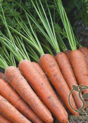 "Морковь ""Аурантина"" F1 100 000 сем., Takii Seeds"